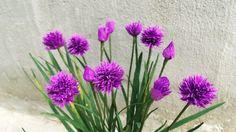 ABC TV |Как сделать лук Бумажные цветы из крепированной бумаги - Учебник...