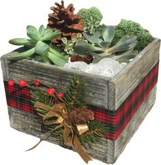 This Plant Nite Rustic Wooden Cube Terrarium is perfect for making over the holiday season to use as home decor. Bring home some holiday cheer.