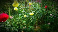 A row of dailie flowers