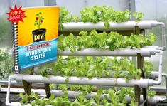 Create a Garden with No Soil, and Little Work Backyard Coop, Chickens Backyard, Hydroponics System, Hydroponic Gardening, Gardening Tips, Secret Garden Book, Survival Project, Edible Plants, Grow Your Own Food