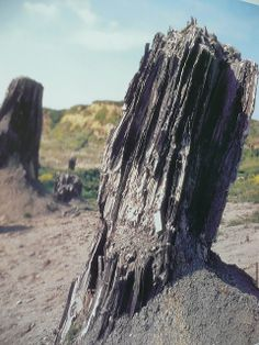 Prehistoric Trees, Foresta Fossile di Dunarobba by debs-eye, via Flickr