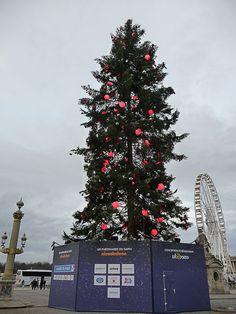 Le sapin de Noël géant de la place de la Concorde (Paris 1er)