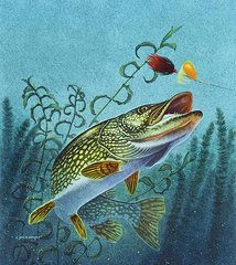 Fish Art - Northern Pike Spinner Bait by Jon Q Wright