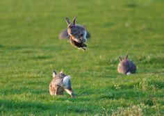 bunny bunny bunnyyy