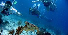 48788b1c232 17 Best Scuba dive images