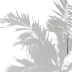 Palm leaf shadow photography shadows I'm a Happyholic Black And White Aesthetic, Aesthetic Colors, Aesthetic Pictures, White Aesthetic Photography, White Feed, White White, Feeds Instagram, White Wallpaper, Shades Of White