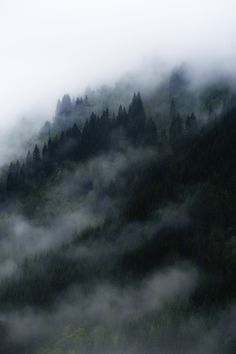 Mist, clouds and pine trees  ~ Mundal, Fjaerland, Norway.