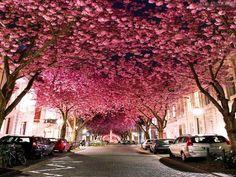 🤗Bonn, Duitsland