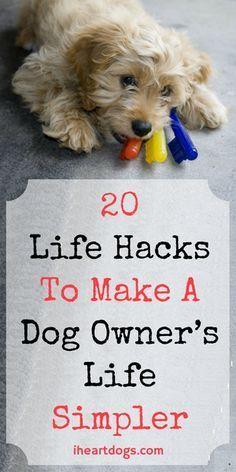 20 Life Hacks To Make A Dog Owner's Life Simpler Shih Tzu, Life Hacks, Dog Information, Puppy Care, Pet Care, Dog Care Tips, Pet Tips, Dog Hacks, Baby Hacks