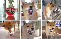 Android 博覽館 狗狗玩球,它看起來很開心呢.jpg (720×462)
