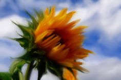 Google Image Result for http://essentialscafe.com/forums/storage/24/29910/sunflower_Painting-241kb.jpg