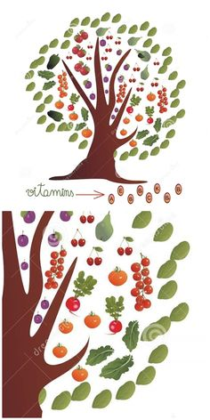 with and tomato cherry truss tomatoes green pepper radish salad apple pear plum and cherries on a white background and with leaf framed treetop - useful for stationery presentation Radish Salad, Apple Pear, Tree Tops, Vegetable Stock, Lush Green, Stuffed Green Peppers, Painted Signs, Food Presentation