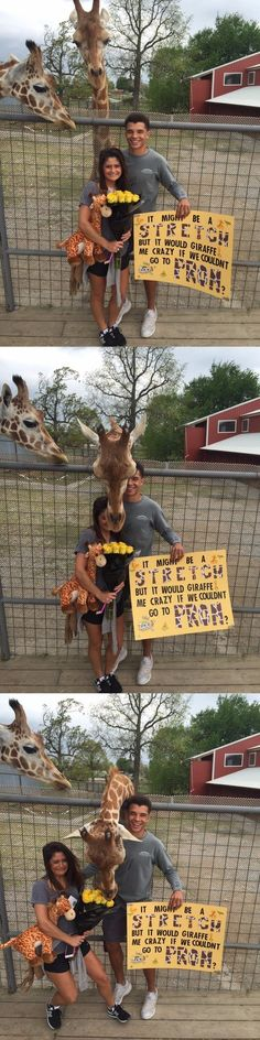 Giraffe Interrupts Teen's Prom-Posal Jealous Giraffe Interrupts Teen's Prom-PosalGiraffe (disambiguation) The giraffe is a long-necked ruminant of the African savannah, the tallest living land animal. Giraffe may also refer to: Best Prom Proposals, Cute Homecoming Proposals, High School Dance, School Dances, Prom Couples, Cute Couples, Country Couples, Wedding Couples, Funny Prom
