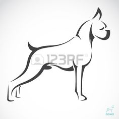 Vector image of an dog boxer  on white background
