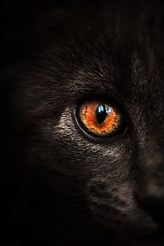 Coal black with eyes of fire, they wandered the fire-licked halls, often vanishing in pillars of smoke.
