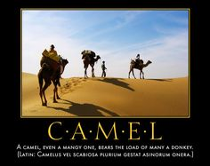 Go Proverbs! Proverb Laboratory: Poster: The Camel