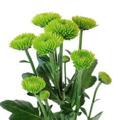 santini flower - Google Search