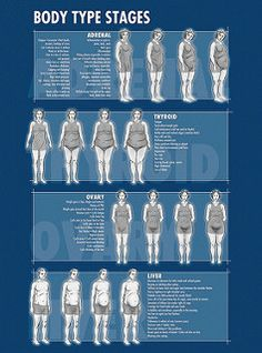 DrBerg_Body_Type_Stages | by DrEricBerg