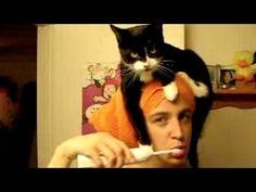 Cute munchkin baby kitten talks too much - YouTube