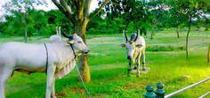 The Jayaprakash Narayan Biodiversity Park