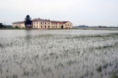 Lo spettacolo delle risaie in Lomellina #Pavia