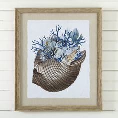 Mollusk Framed Print II #birchlane