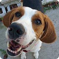 Adopt A Pet :: Colt - Lisbon, OH