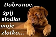 OBRAZKI HELENKI: MIŁEGO WIECZORU Humor, Words, Animals, Oblivion, Text Posts, Cute Animals, Animais, Humour, Animales