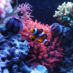#reefscape #aquarium #aquascaping #aquascape #fish #planted #plantedtank #plants #scape #aquariumcreation #wetarms #aquariummarine