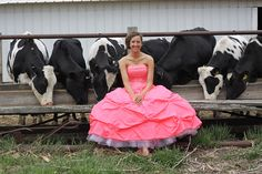 Prom season is here! Elizabeth Sarbacker is all dressed up and ready for the Verona High School Prom recently in Verona, WI. She stopped for a few pictures around Fischerdale Holsteins on a beautiful WI spring day. ~Photo by Jessica Sarbacker   Read more: http://www.holsteinworld.com/#ixzz2SWaDO67B