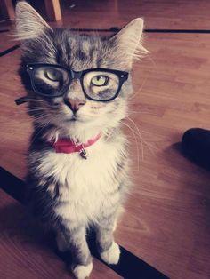 Nerd Cat!