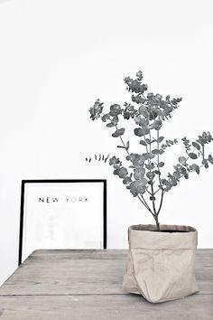 ...eukalyptus