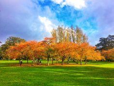 Who doesn't love Autumn? Golf Courses, Autumn, Painting, Art, Art Background, Fall Season, Painting Art, Kunst, Fall