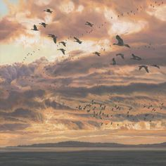 Pictures of geese, wildlife art - goose prints and paintings by Martin Ridley Wildlife Paintings, Wildlife Art, Duck Pictures, Heart Photography, Imagines, Prints For Sale, Backdrops, Original Paintings, Swans