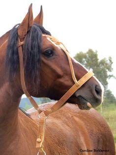 RZ AHORA QUEM SABE DA CARAPUÇA.. (BT Lamborguine X BT Jurada) Fotografias Caroline Birkheuer Cavalo Crioulo