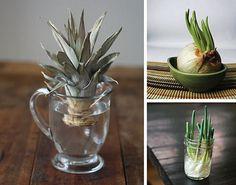 how to regrow vegetables, gardening, how to: odla en ananas, det måste man prova!