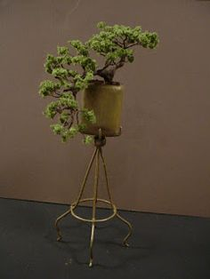 The Little House at Pine Haven: Cascade Bonsai  Finished the Cascade Bonsai I hav...