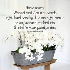 Good Morning Wishes, Day Wishes, Good Morning Quotes, Lekker Dag, Evening Greetings, Afrikaanse Quotes, Goeie More, Good Night Sweet Dreams, Positive Thoughts
