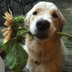 Animals And Pets, Baby Animals, Funny Animals, Cute Animals, Cute Puppies, Cute Dogs, Dogs And Puppies, Doggies, Dog Life
