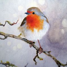 'Fine Winter Coat' by Lara Cobden. Blank Art Cards By Green Pebble.