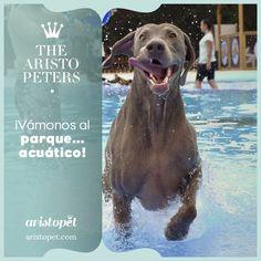Si todavía no tienes plan para estas vacaciones, tenemos una propuesta para ti y tu mascota que os va a encantar. ¡Visitar el primer parque acuático para perros de España! Descubre más sobre el resort Can Janè en aristopet.com/aristopeters/vamonos-al-parque-acuatico/