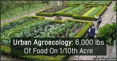 Watch How This Family Produces 6,000 lbs Of Food On 1:10th Acre  ►► http://off-grid.info/blog/urban-agroecology-6000-lbs-of-food-on-10th-of-an-acre/?i=p