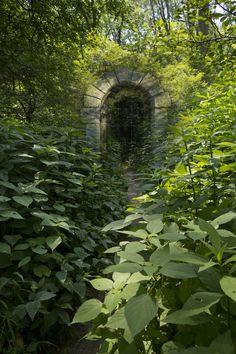 Park Woods Portal Chagrin Falls Ohio (by jsbanks42)