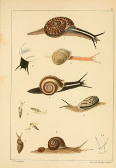 old snail print - or as I like to think of them, escargot