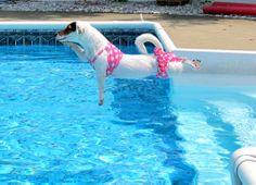 Meet Ramona who loves the pool. Ramona's shot required no airbrushing.
