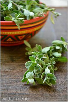 6 Top Benefits & Uses of Marjoram For Health, Skin & Hair (Sweet Marjoram | Origanum Majorana) | wildturmeric