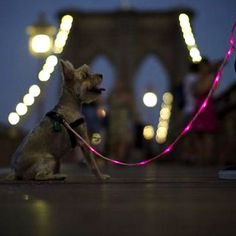 Tip: Scents and landmarks may change after a catastrophe; keep your pet on a leash when going outside. Up Dog, Cool Electronics, People Shopping, Gadgets And Gizmos, Pet Clothes, Dog Leash, Go Outside, Night Time, Light Up