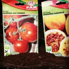 Sementes para germinação!   #folhasensitiva #chamaafolhasensitiva #germinação #sementes #tomate #tomates #maracuja #hortasurbanas #hortas #natureza #hortasemcasa #permacultura #plantar #cultivo #plantas #saopaulo #pinheiros #instagram