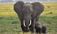 People Can Change, Wildlife Conservation, East Africa, Animal Welfare, Small Groups, Creatures, Innovative Ideas, Farmers, Elephants