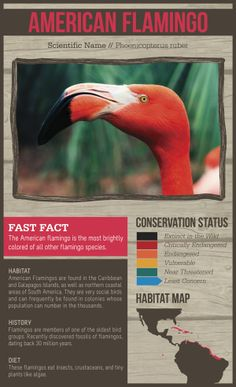 Listing Conservation status  Riverbanks Zoo Signage by Billy Fasig, via Behance